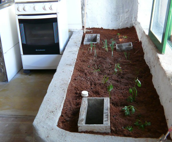 Logo teremos salsinha, cebolinha, manjericão e gengibre ao lado do fogão!