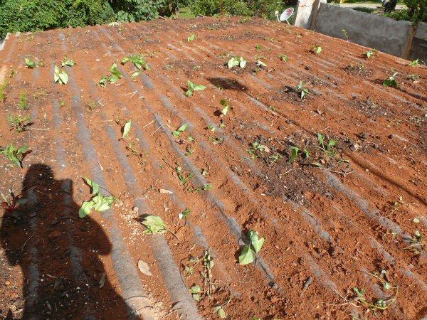 Colocamos diversas plantas ornamentais no telhado do mezanino!
