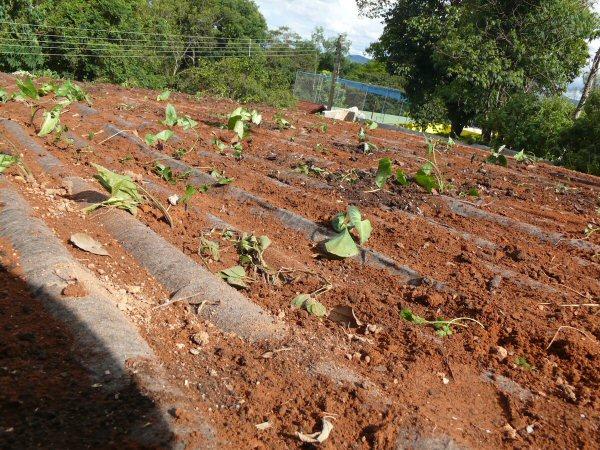 Antes de colocarmos terra, foi posto o bidin para não acumular água no telhado que é feito de telhas ecológicas Ibistetra.
