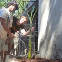 Primeira árvore no filtro biológico externo
